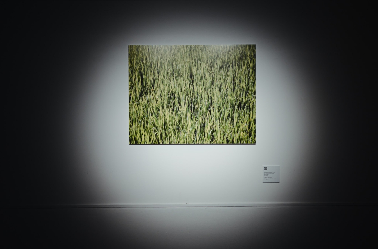"""Untitled, from the series """"Grass"""""""
