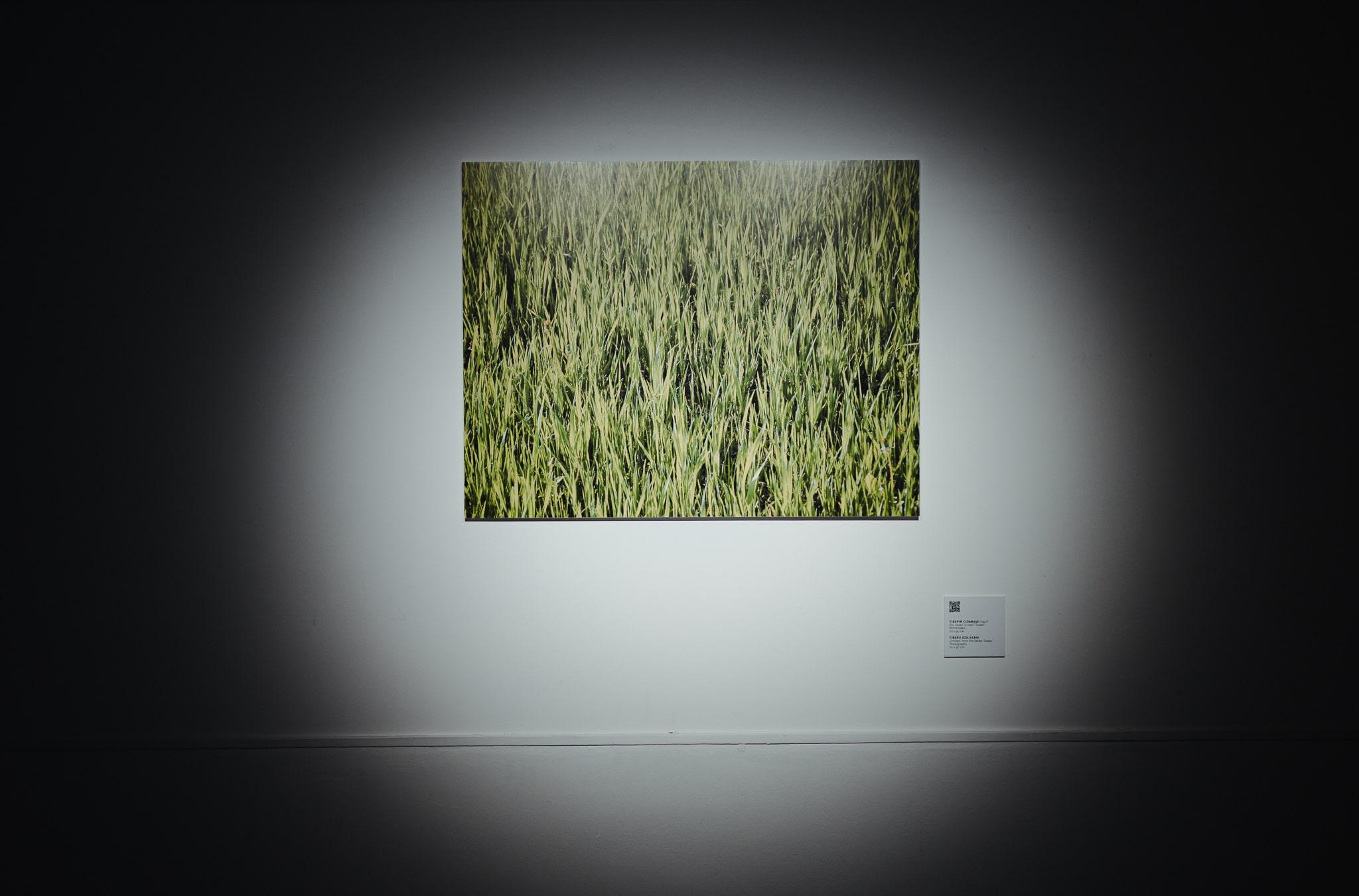 Без назви, із серії «Трава»